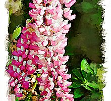 Pink Lupins watercolour by PhotosByHealy