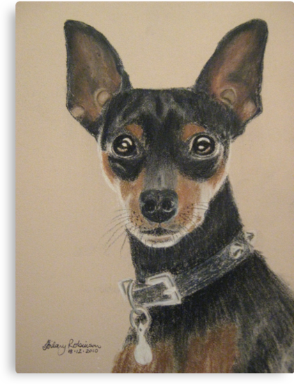 Miniature Pinscher - who's a handsome boy, then? by Hilary Robinson