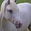 Pony portrait by rajamis