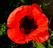 Cusp Cuspschen's 'poppy' by Art 4 ME