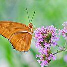 Orange Julia Butterfly by Oscar Gutierrez