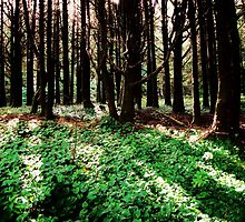 Forest Floor....Neptune Beach, Yachats, Oregon by trueblvr