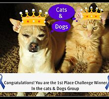 Congratulations Cats & Dogs Challenge Group by AngieBanta