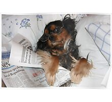 It's Good to be Me! Cavalier King Charles Spaniel Poster