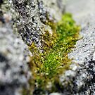 brick moss by shootinglife