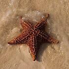 Starfish, Nassau, Bahamas by Shane Pinder