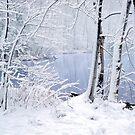 Fresh Fallen Snow by Oscar Gutierrez