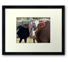 What You Lookin' At - The Bull Framed Print