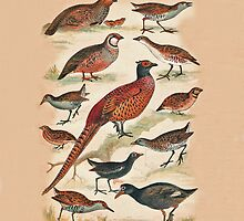 Pheasant and more by Eric Kempson