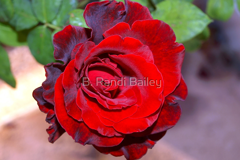 Climbing red rose by ♥⊱ B. Randi Bailey
