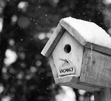 Bird House for Rent by Mark Van Scyoc