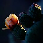Cactus Flower 2011 #21 by Richard Rushton