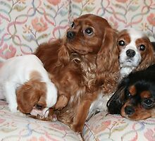Princess Fiona, Horatio, Isabella & Maximus - a family reunion by fionahoratio
