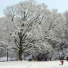 "Sledding Waveny Hill by Christine ""Xine"" Segalas"