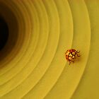 Lady Bug in a Light by Irishkid1066