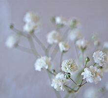 baby's breath by Sally Allerton
