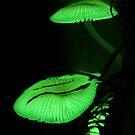 Luminescent  by Raychel