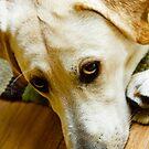 Puppy Dog Eyes by NervousNellie