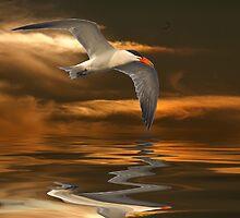Tern in Flight by imagetj