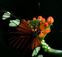 Butterfly lowlight by ammit