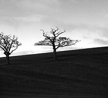 Two Tree Hill Panorama Black & White by Peter Tachauer
