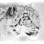 Snow Leopard (Digital Art) by Alain Turgeon