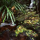Ottford - Royal National Park by Mike Buick