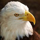 Eagle Eye by Janice McCafferty