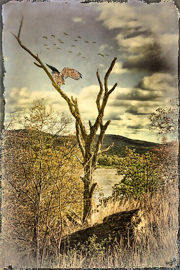 Owl's Roost by Chris Lord