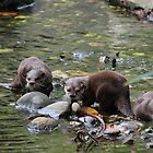 Otters In Water by Brett Morris