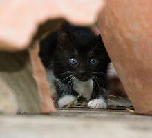 Kitten at Dalyan by Christopher Cullen
