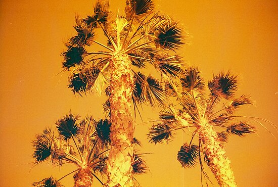 Redscale Palmtrees by Mattias Olsson