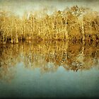River Cypress by Jonicool