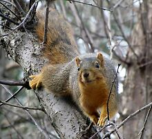 Squirrel Smiles by Veronica Schultz