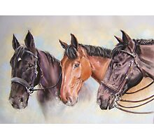 Robinsons' horses Photographic Print