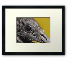 A Face Only a Vulture Could Love Framed Print