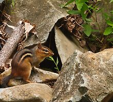Chipmunk at His Home by Joe Elliott
