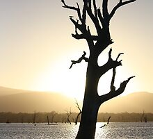 Lake Fyans - Tree Silhouette  by Luke Thomas