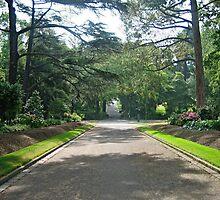 Fitzroy Gardens by janewiebenga
