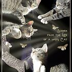 Scenes from the Life of a Happy Cat by aura2000