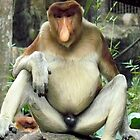 Proboscis Monkey by jainiemac