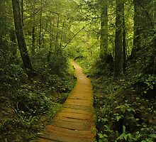 Olympic National Park by Doug Graybeal
