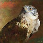 ferruginous hawk study by R Christopher  Vest