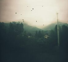Birds II by AlexandraSophie