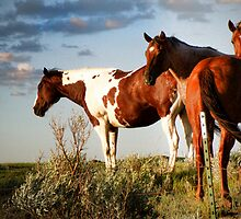 Horse of a Different Color by Kay Kempton Raade