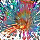 Psychedelic Spiral by Marina Raspolich