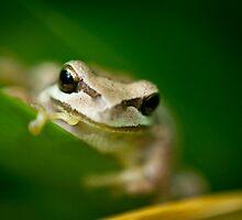 Frog by Jodi Turner