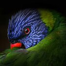 lorikeet by Matt Mawson