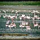 flamingos by fabioberetta