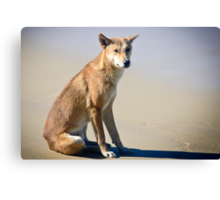 Beach Solitude (Dingo) Canvas Print